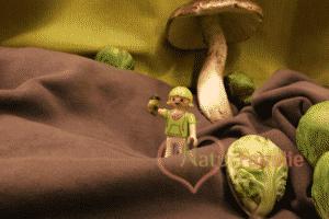 Beitragsbild Unsere Erfahrungen mit veganer Ernährung und der Weg zu Weston Price